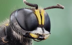 insect, nature, animals, macro