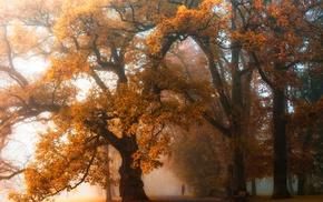 walking, trees, orange, landscape, fall, park