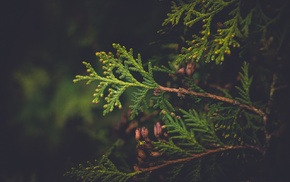 plants, Latvia, conifer, nature, vignette