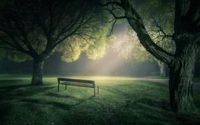 landscape, trees, green, lawns, park, lights