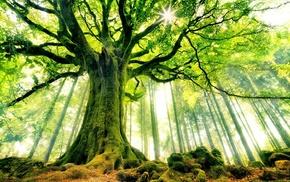 moss, nature, forest, landscape, ancient, beech