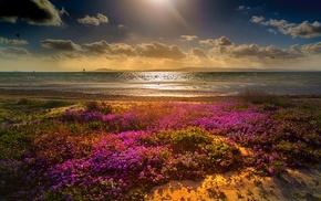 coast, landscape, green, flowers, clouds, beach