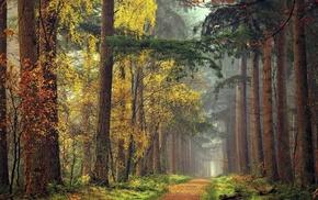 nature, landscape, forest, grass, mist, yellow