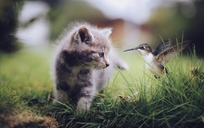 baby animals, kittens, nature, animals, grass, cat