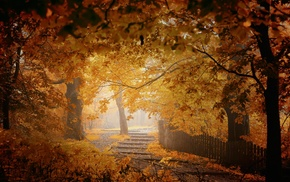 trees, yellow, nature, walkway, mist, fence