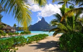 palm trees, resort, beach, shrubs, landscape, tropical