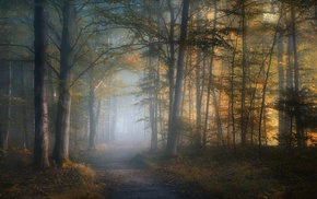 path, morning, fall, mist, dirt road, trees