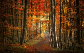 path, landscape, leaves, trees, yellow, morning