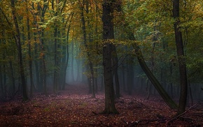 forest, morning, nature, leaves, trees, fall