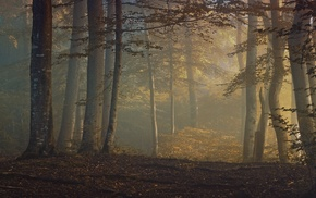 morning, sunrise, leaves, fall, trees, forest