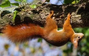 animals, upside down, squirrel