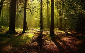 forest, leaves, trees, nature, shadow, sunlight