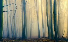 branch, leaves, mist, moss, forest, nature