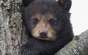 animals, bears, baby animals