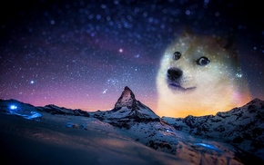 animals, memes, snow, night, doge