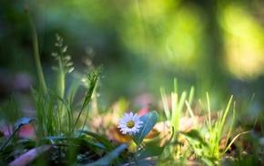 nature, Chamomile, flowers, bokeh, daisies, grass