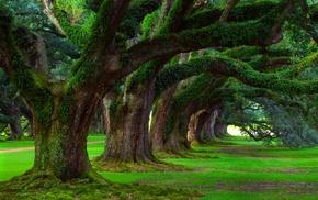 grass, nature, ancient, moss, landscape, oak trees