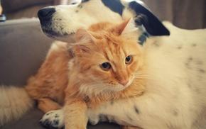 hugging, dog, animals, cat