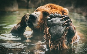 animals, paws, water, bears