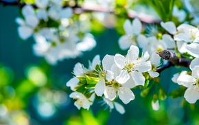 nature, flowers, depth of field, white flowers