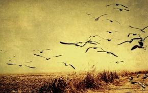 nature, seagulls, birds