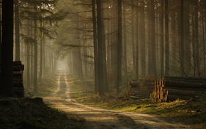 road, nature, grass, mist, landscape, sunlight