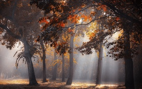 forest, mist, landscape, leaves, fall, trees