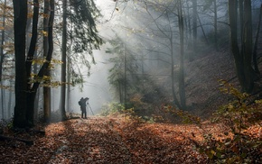 forest, leaves, sunlight, trees, fall, mist