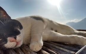 sunlight, animals, Italy, wooden surface, cat