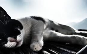 sunlight, cat, animals, filter, Italy