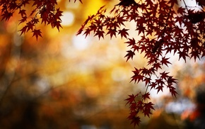 nature, bokeh, fall, water, maple leaves, leaves