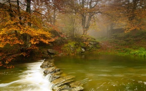nature, trees, landscape, forest, stones, river