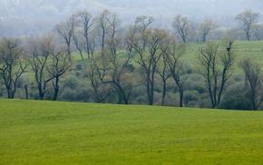 grass, trees, mist, nature, landscape