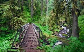 trees, forest, shrubs, Oregon, river, creeks