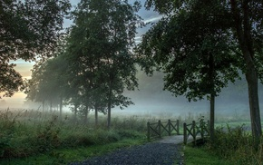 mist, forest, path, morning, landscape, trees
