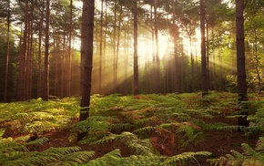 ferns, nature, trees, plants, forest, branch