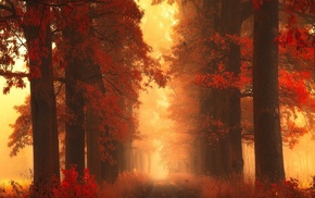 nature, shrubs, leaves, path, mist, grass