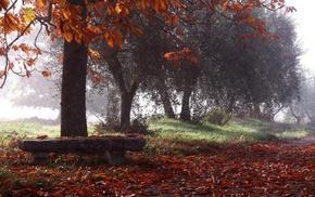 trees, nature, bench, rain, leaves