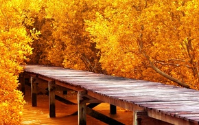 water, trees, fall, yellow, landscape, wooden surface