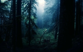 forest clearing, forest