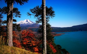 landscape, fall, nature, lake, monkey puzzle tree, grass
