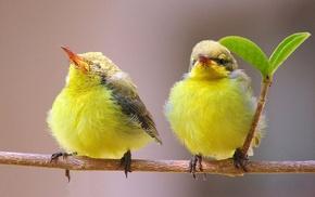 birds, animals, nature