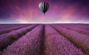 purple flowers, landscape, lavender, field, hot air balloons