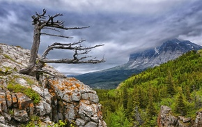 dead trees, trees, cliff, nature, overcast, mountain