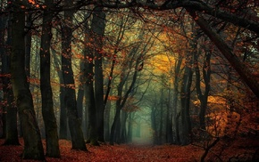 leaves, trees, mist, fall, landscape, forest