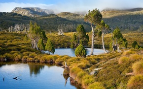 Tasmania, mountain, grass, water, nature, shrubs