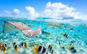 fish, sea, Bora Bora, split view, Stingray