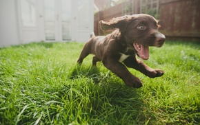 dog, Run, baby animals