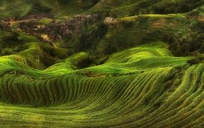 terraces, rice paddy, trees, field, green, landscape