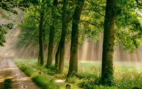 rain, path, nature, sunlight, green, trees